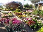 Traspaso Centro Jardinería