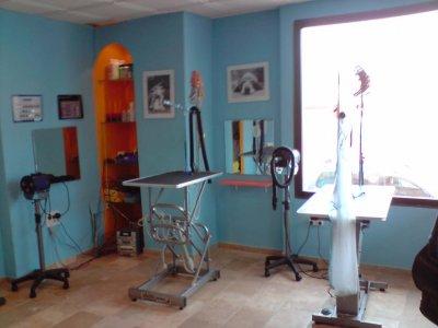 Peluqueria canina b squeda socio inversor de peluquer a for Peluqueria mesa y lopez