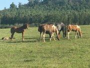 uruguay2_1551949965.jpg