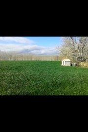 alquilo terreno de 4 hectareas en girona ( tocando la nacional 2 ) altura pueblo de sils / posible participacion , por mi parte, en la empresa
