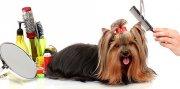 Tienda y peluqueria canina